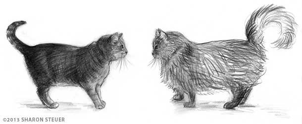 Drawings of Puma and Bear in profile